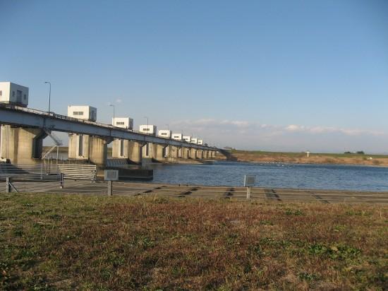 行田市利根大堰「大堰自然の観察室」で鮭の遡上の見学