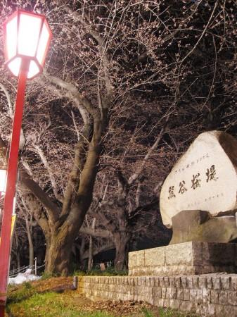 熊谷と籠原と深谷:それぞれの夜桜見物