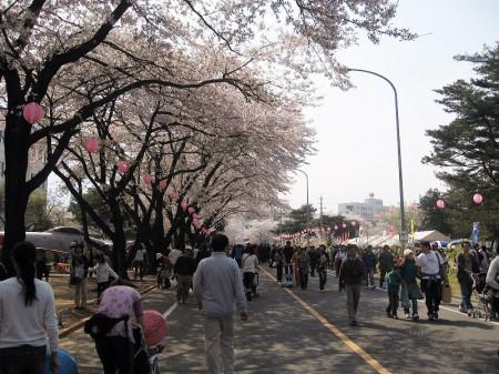 航空自衛隊熊谷基地のさくら祭りがもうすぐ
