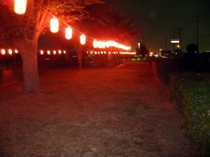 おかべコスモス祭り2009