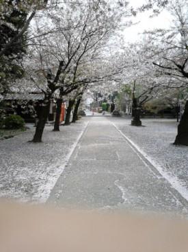 桜吹雪の聖天様