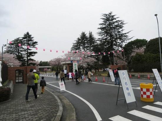 KBsakura2015_01
