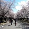 2016年 航空自衛隊熊谷基地の「さくら祭」は4月3日(日)