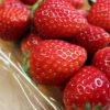 太田市中根町「戸黒農園 完熟いちご直売所 赤い幸せ」のいちごと赤い幸せジェラート2種